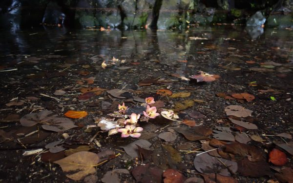 Flowers in the mud